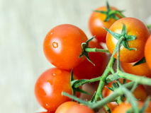 Röda mogna Cherry Tomatoes Arkivfoto