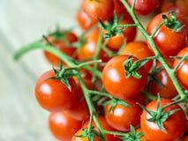Röda mogna Cherry Tomatoes Royaltyfri Foto