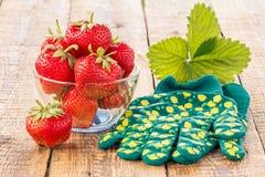 Röda mogna jordgubbar i den glass bunken och handskar på gammal träboa Royaltyfri Fotografi