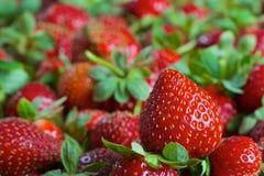 Röda mogna nya jordgubbar Arkivbild