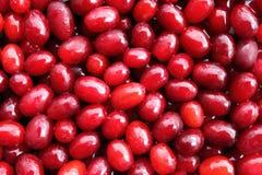 Röda mogna nya tranbär Arkivbild