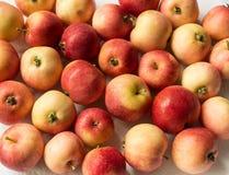Röda, mogna och härliga äpplen Mycket Arkivfoto