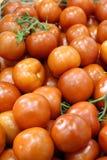 Röda mogna saftiga tomater med den gröna kvisten arkivfoton