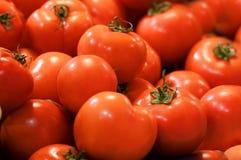 röda mogna tomater Royaltyfria Bilder