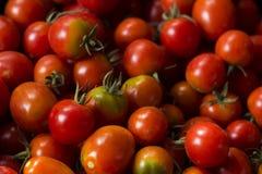Röda mogna tomater med klipp, bästa sikt, bakgrund Royaltyfri Fotografi