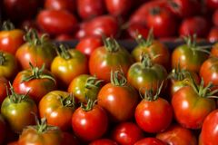 Röda mogna tomater med klipp, bästa sikt, bakgrund Royaltyfria Foton