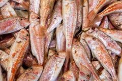 Röda multefiskar (Mullusbarbatusen) Arkivfoto