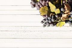 Röda naturliga organiska druvor på en vit trätabell Royaltyfri Bild