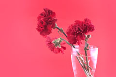 Röda nejlikor i vasen på en röd bakgrund, selektiv fokus Royaltyfri Bild