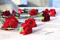 Röda nejlikor på monumentet och blommorna Royaltyfri Foto