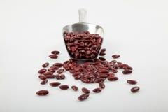 Röda njurebönor med skopan Royaltyfria Bilder