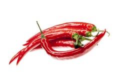 röda nya isolerade peppar för chili Fotografering för Bildbyråer