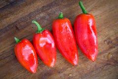 röda nya peppar Arkivbild