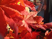 Röda och apelsinblommor Arkivbilder
