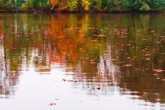 Röda och bruna höstsidor i ett vatten i ett damm Royaltyfri Bild