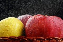 Röda och gröna äpplen Arkivbilder