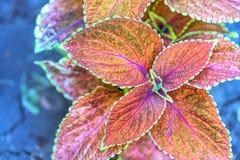 Röda och gröna blommasidor Arkivfoton