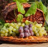 Röda och gröna druvor på gnäggandet arkivbilder
