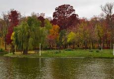 Röda och gröna träd på sjön Arkivbild
