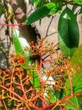 Röda och gröna växter Royaltyfria Bilder