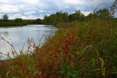 Röda och gröna växter på en flodkust Fotografering för Bildbyråer