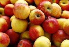 Röda och gula äpplen royaltyfria foton