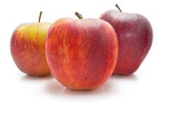 Röda och gula äpplen Arkivfoto
