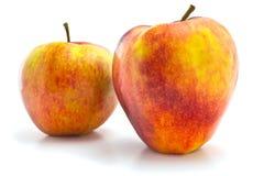 Röda och gula äpplen Royaltyfri Bild