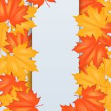 Röda och gula Autumn Leaves Pattern Royaltyfri Bild