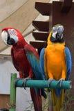 Röda och gula blått mekaniskt säga efter anseende på trä tillsammans fotografering för bildbyråer