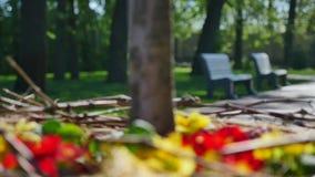 Röda och gula blommor runt om closeupen för trädstam med bänkar i gränden lager videofilmer