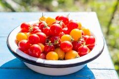 Röda och gula körsbärsröda tomater i maträtt Royaltyfri Fotografi