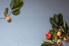 Röda och gula sidor för höst av fruktgranatäpplepersimonet arkivbild