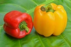 Röda och gula spanska peppar som förläggas på sidorna royaltyfria foton