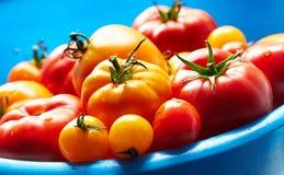 Röda och gula tomater i stora blått bowlar arkivbild