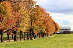 Röda och gula träd som leder till en ladugård Arkivbilder