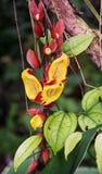 Röda och gula tropiska blommor Royaltyfria Bilder
