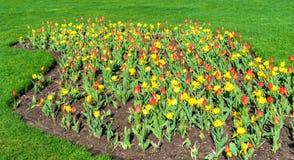 Röda och gula tulpan i drottningen Victoria Park - Niagara Falls, Kanada Arkivbild