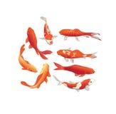 Röda och guld- beståndsdelar för design för koifiskvektor Royaltyfri Bild