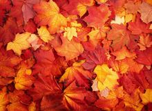 Röda och orange Autumn Leaves Background Arkivbild