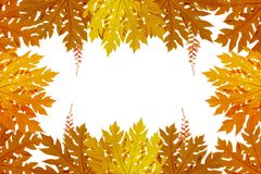 Röda och orange Autumn Leaves Background, bakgrund Royaltyfri Fotografi