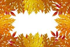 Röda och orange Autumn Leaves Background, bakgrund Fotografering för Bildbyråer
