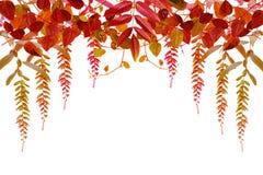 Röda och orange Autumn Leaves Background, bakgrund med kopieringsutrymme Arkivfoton
