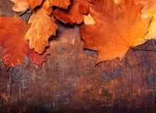Röda och orange Autumn Leaves Background Gul stupad höst Royaltyfria Foton