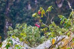 Röda och rosa blommor av bergen i Inca Trail royaltyfria bilder