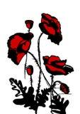 Röda och svarta vallmo Stock Illustrationer