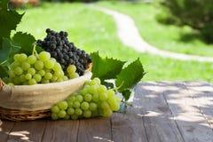 Röda och vita druvor i korg royaltyfria foton