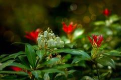 Röda och vita gnistor Arkivfoto