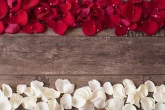 Röda och vita roskronblad på träbakgrunden Rose Petals Border på en trätabell Bästa sikt, kopieringsutrymme den blom- ramen inram Arkivbild