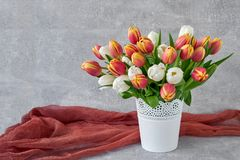 Röda och vita tulpan i den vita vasen Feriebakgrund, kopieringsbrunnsort Fotografering för Bildbyråer
